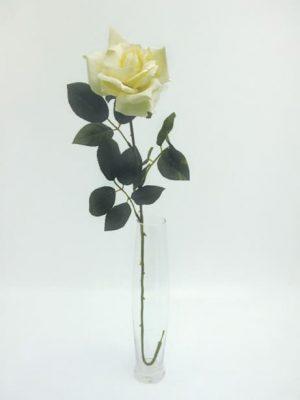 Premium Rose Large Cream