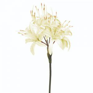 Nerine Cream 70cm