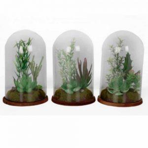 20x13cm Succulent in Glass Dome