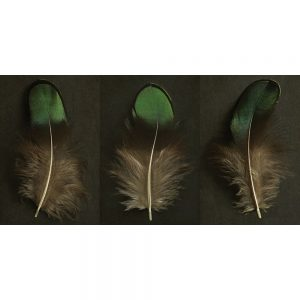 Alyson Fennell Feather Triptych Canvas